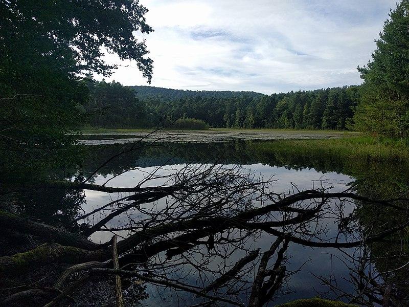 Waldeck Pond in Éguelshardt, France