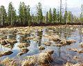 Болото, marsh - panoramio.jpg