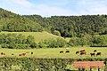 Коровы в Монестье-Де-Клермоне - panoramio.jpg