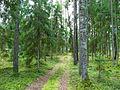 Лесная дорога meža ceļš - panoramio - Aleksandrs Timofejev… (4).jpg