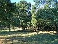 Окрестности Вильного - panoramio (1).jpg