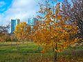 Осенью в парке.JPG