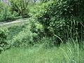 Парк шума Гази Баба во мај (65).JPG