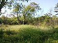 """Парк шума """"Гази Баба"""" 17.jpg"""