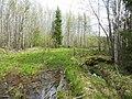 Просека на Хохловку, конец мая 2013 - panoramio.jpg