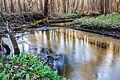 Річка Іловиця 02.jpg