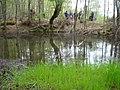 Самево Езеро (Езерче) 03.jpg