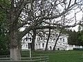 Сокиринці (Садиба Галаганів). Віковий дуб.jpg