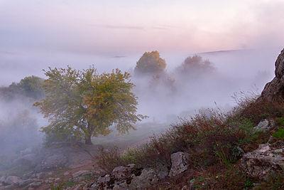 Туманна рапсодія.jpg