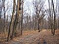 Украина, Киев - Голосеевский лес 259.JPG