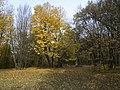 Украина, Киев - Голосеевский лес 72.jpg