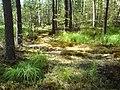 Урочищные места - panoramio (13).jpg