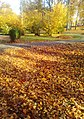 Царникава (Латвия) Осень в городском парке - panoramio.jpg