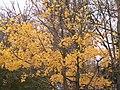 Царникава (Латвия) Осень в парке - panoramio.jpg