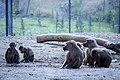 مجموعه عکس از رفتار میمون ها در باغ وحش تفلیس- گرجستان 03.jpg