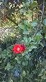 وهل هناك أجمل من الزهور في الربيع.jpg