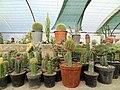 گلخانه کاکتوس دنیای خار در قم. کلکسیون انواع کاکتوس 35.jpg