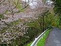 吉野山 中千本 2013.4.03 - panoramio.jpg