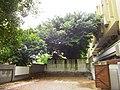 城牆上的老榕樹 - panoramio.jpg