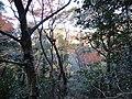 岐阜市 - panoramio (15).jpg