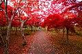 平岡樹芸センター(Hiraoka arboriculture center) - panoramio (6).jpg