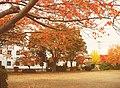 平成22年11月6日土曜日(1) - panoramio.jpg