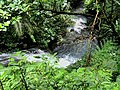 得子口溪 Dezikou River - panoramio.jpg