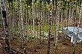 檳榔園 Betel Nut Plantation - panoramio.jpg
