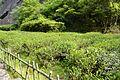 武夷山茶园风光.jpg