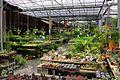 社子花市 Shezi Flower Market - panoramio (1).jpg