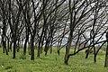 衢州服务区旁边的树林 - panoramio.jpg