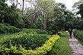 高峰植物園 Gaofeng Botanical Garden - panoramio.jpg