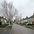 -2021-01-30 Silver birches lining Langham Road, Cherry Hinton.jpg