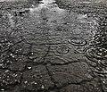 003 365 Rain Day! (31964631481).jpg