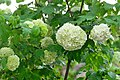 02018 0239 Blumen am Schloss.jpg