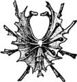 1911 Britannica-Arachnida-mygalomorphous spiders.png
