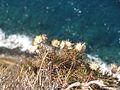 2005-07-05 - Monemvasia 01.jpg