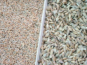 Spelt - Spelt, without and with husks
