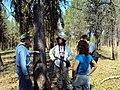 2010. Forest entomologists (l-r) Don Scott, Lia Spiegel, Laura Lazarus, and Bruce Hostetler examining pine butterfly defoliation. Eastern Oregon. (36773160584).jpg