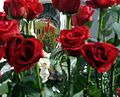 2012 Derby roses.jpg