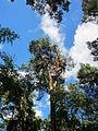 20130731Speyrer Wald45.jpg