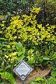 2016 Singapur, Ogrody botaniczne (365).jpg