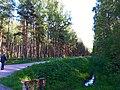 2188. Alley in the park Sosnovka.jpg