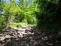 27 Turismo Emilia Romagna 8 giugno 2019 Parco dei laghi di Suviana e Brasimone, un ringraziamento speciale alle guide Eugenia e Walter.jpg