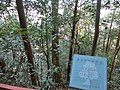 2 Chome Tsukimichō, Tajimi-shi, Gifu-ken 507-0043, Japan - panoramio (14).jpg