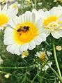 2 Flower.jpg