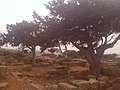 37CESAEREE today TIPAZA .The ancient Roman city in Algeria.jpg
