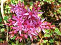 4531 - Bern - Rosengarten - Flowers.JPG
