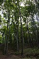 46-101-5015 львівський лісовий.jpg