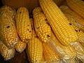 4690Common houseflies and delicacies Bulacan foods 27.jpg